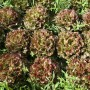 Bio92-salade bio