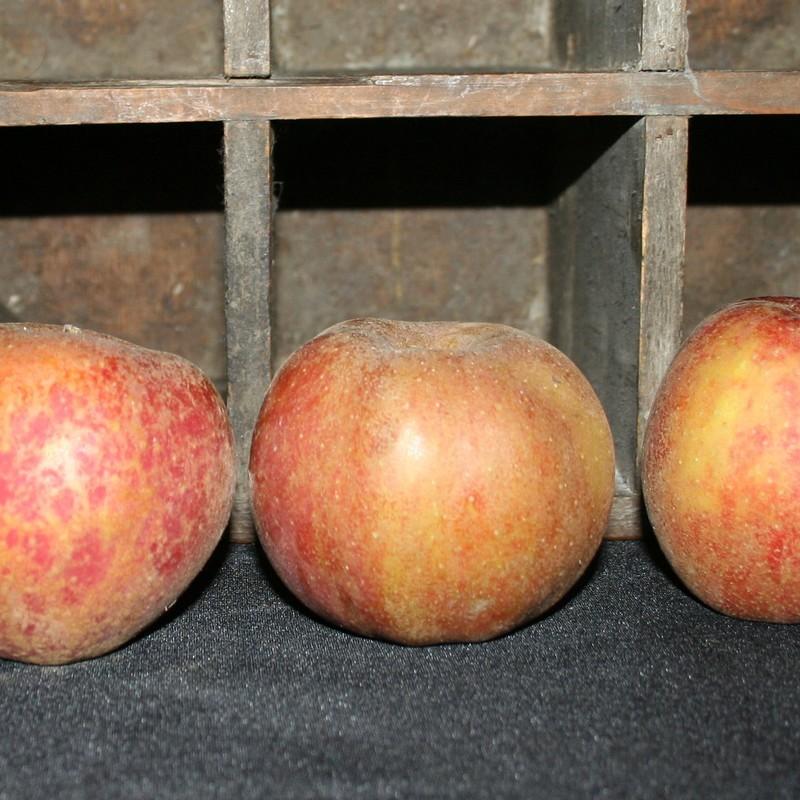 Bio92-pommes-bio-belle-de-boskoop
