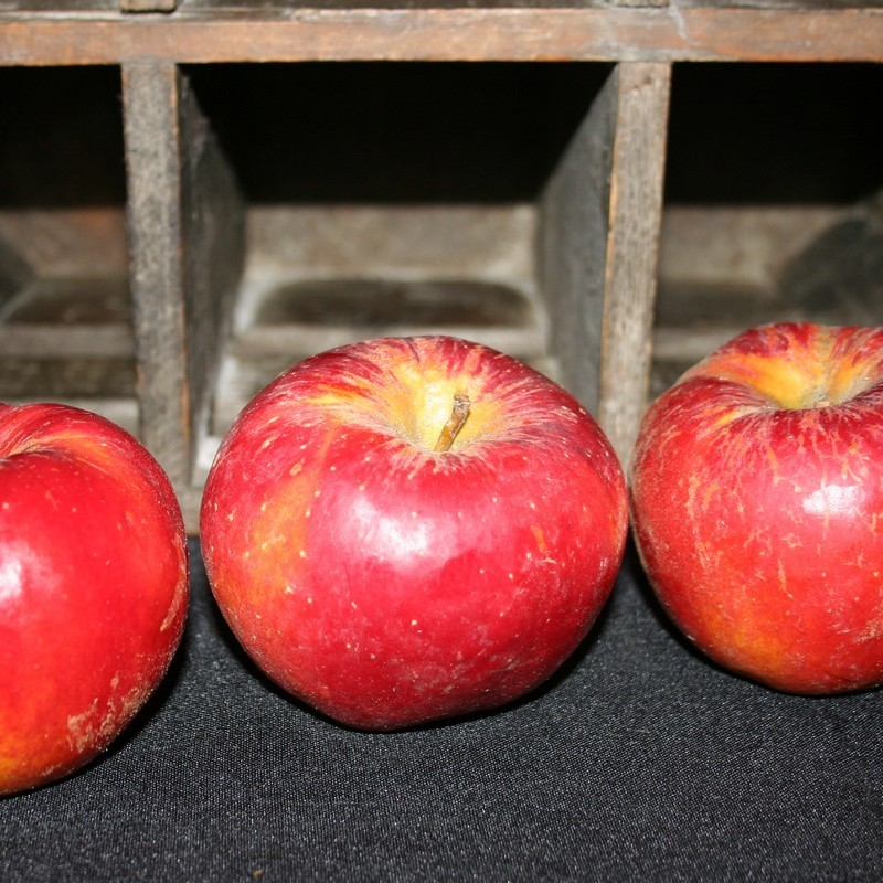 Bio92-pommes-bio-red-topaz