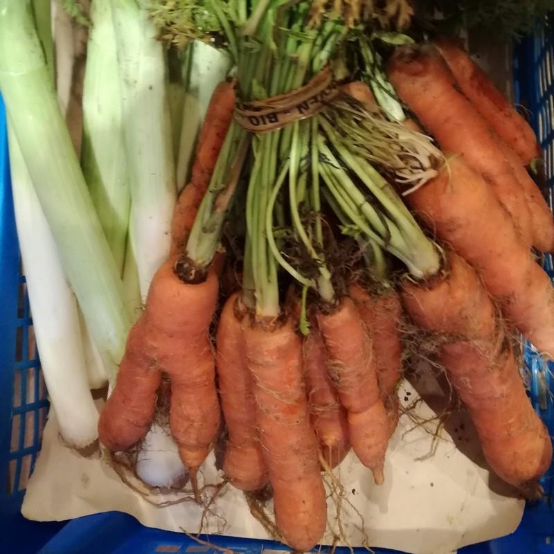 Bio92-botte-de-carottes-nouvelles-bio