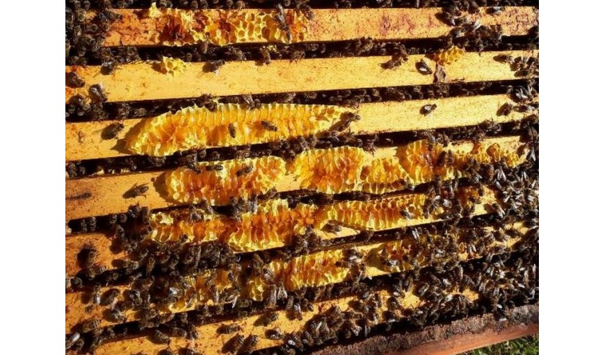 Journée mondiale de l'abeille chez Bio 92
